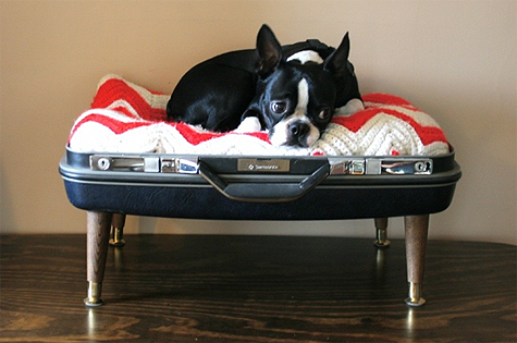 Dog-bed-made-from-a-suitcase